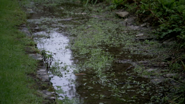 rain falls in a muddy puddle. available in hd. - puddle stock videos & royalty-free footage