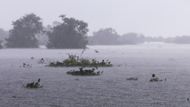 rain falls on lake, cambodia. - torrential rain stock videos & royalty-free footage