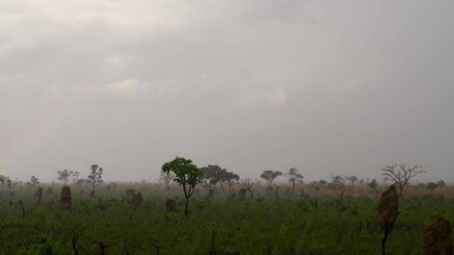 rain falls on termites mound in grassland. - cerrado stock videos & royalty-free footage