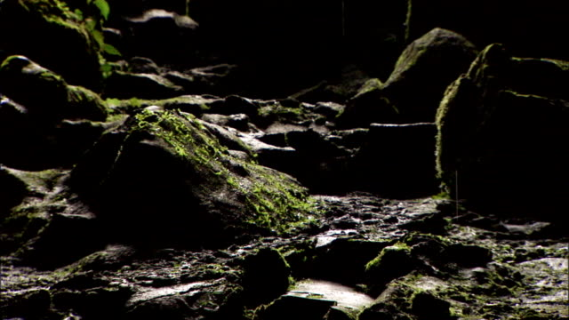 rain falls onto moss-covered rocks. - moss stock videos & royalty-free footage