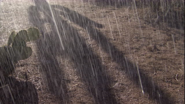 Rain falls onto Sonoran desert, Arizona, USA. Available in HD.