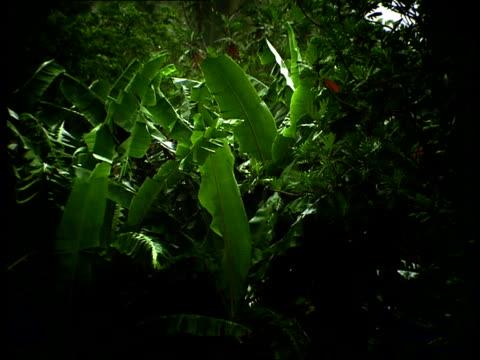Rain falls over green, tropical plants in a jungle.