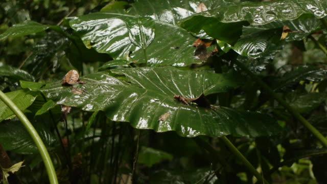 rain forest at refugio nacional gandoca-manzanillo on december 14, 2012 in manzanillo, costa rica - protection点の映像素材/bロール