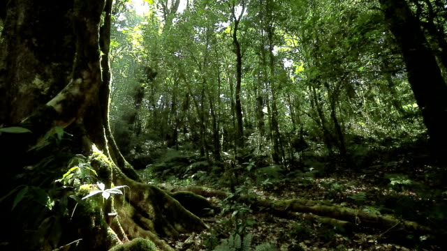 foresta pluviale, dolly shot - clima tropicale video stock e b–roll
