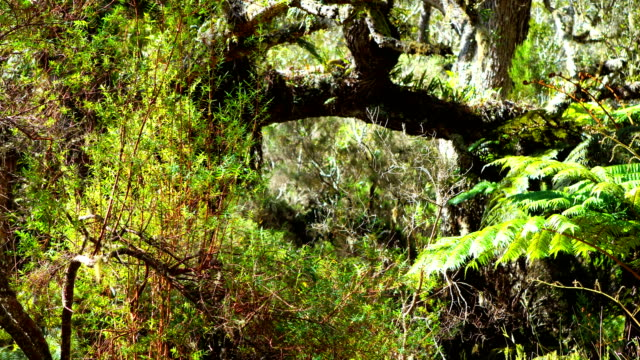 rain forest in reunion island - mafate cirque stock videos & royalty-free footage