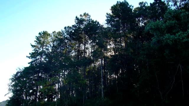 vídeos de stock, filmes e b-roll de floresta tropical. - árvore tropical