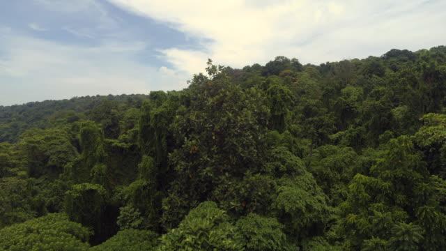 vídeos y material grabado en eventos de stock de rain forrest in mount krakatau - isla de sumatra