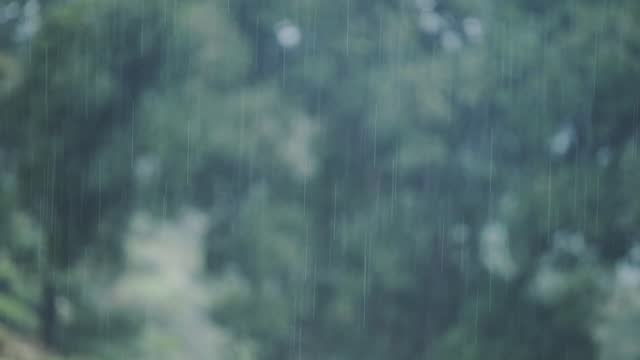 rain heavily pouring in the green forest of munnar located in kerala state, india. -wide shot - hill stock videos & royalty-free footage