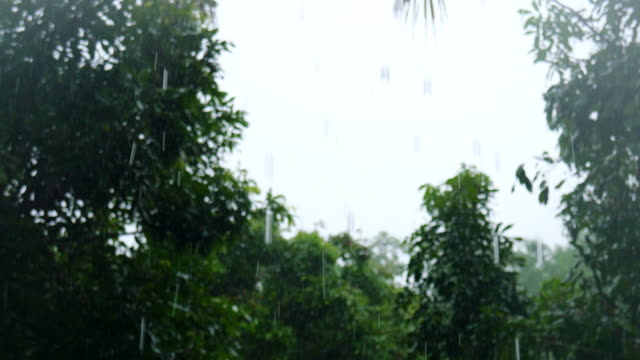 熱帯の森 - 新鮮点の映像素材/bロール