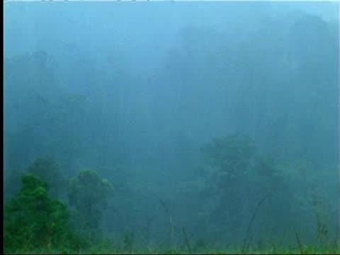 rain in indian rainforest - monsoon stock videos & royalty-free footage