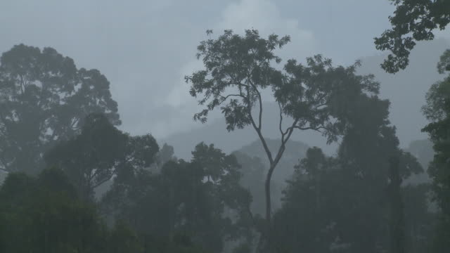 rain in jungle, maliau basin, sabah, borneo - wet stock videos & royalty-free footage