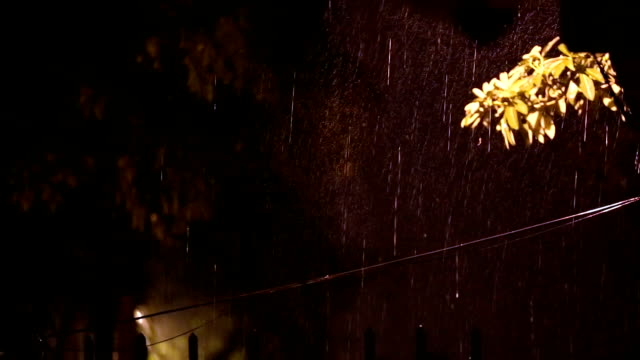rain in the nature - monsoon stock videos & royalty-free footage