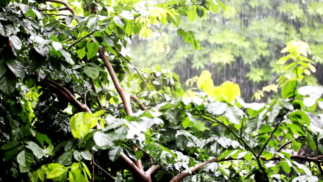 Rain in tropical forest