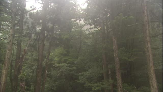 rain in  yakushima. - 林点の映像素材/bロール