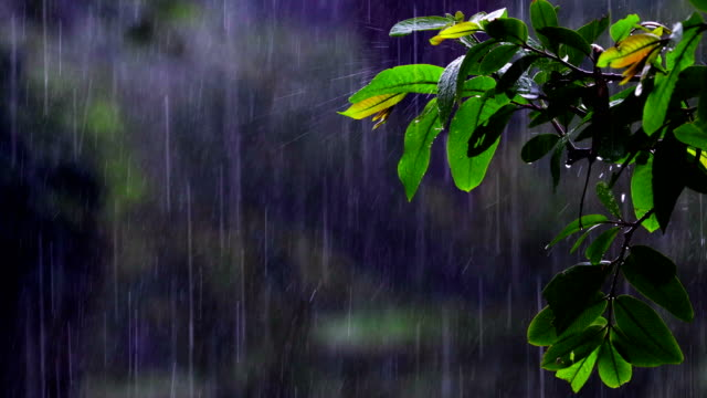 rain & nature - extreme weather stock videos & royalty-free footage