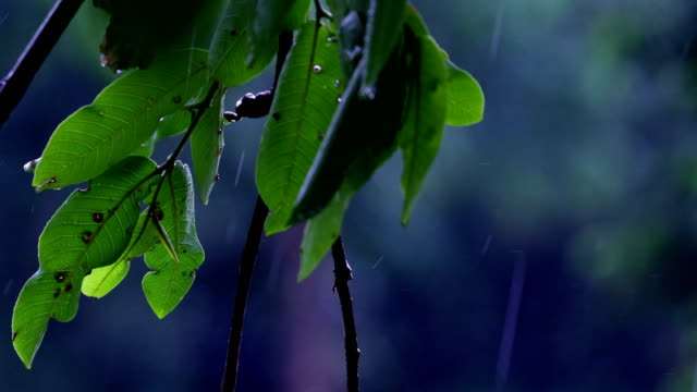 rain & nature - monsoon stock videos & royalty-free footage