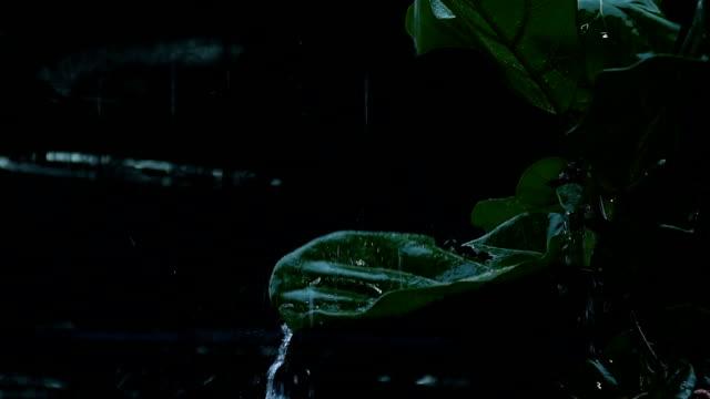 rain on leaf - drain stock videos & royalty-free footage