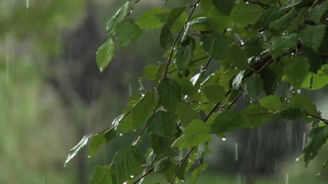 vídeos de stock, filmes e b-roll de chuva de folhas - ramo parte de uma planta
