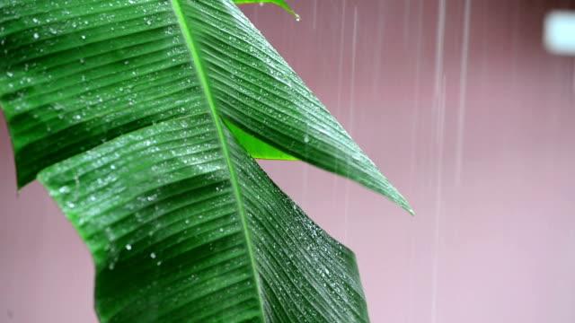 rain on leaves - slip banana stock videos & royalty-free footage