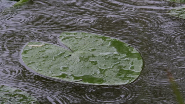 rain on pond, normandy in france, real time 4k - normandy stock videos and b-roll footage