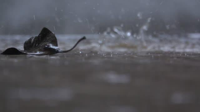 Chuva na estrada câmera