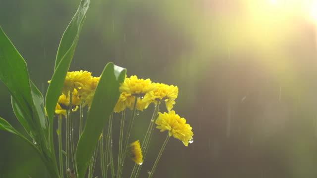 Regen op gele bloem II traag