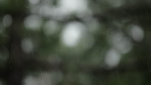 rain over pine tree - defocused - pine stock videos & royalty-free footage