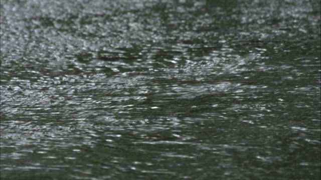 vídeos y material grabado en eventos de stock de rain  roadway - asfalto