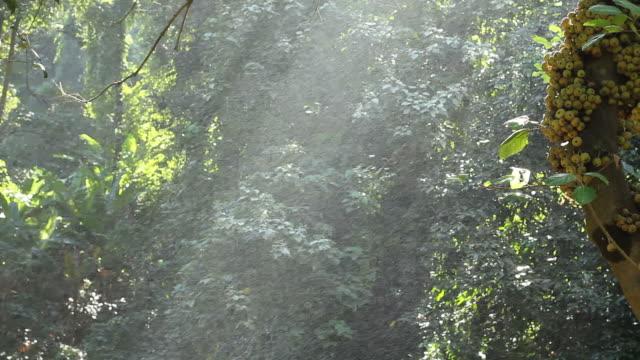 Rain spray with wilderness area