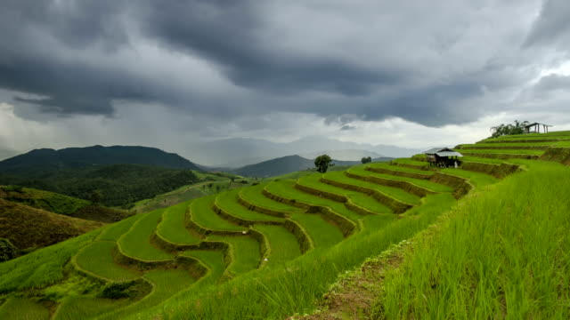 TL: rain strom is coming to rice terrace
