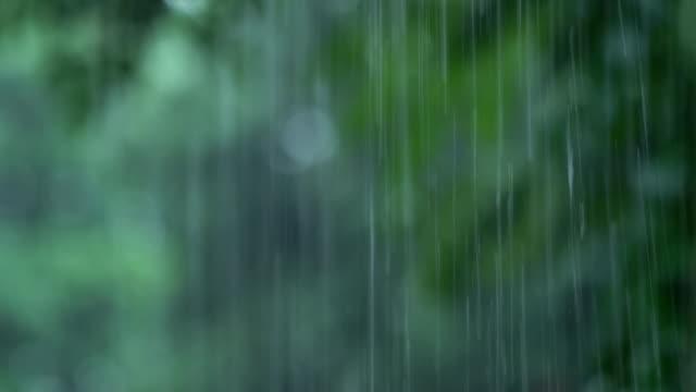 vídeos de stock e filmes b-roll de rain - câmara à mão