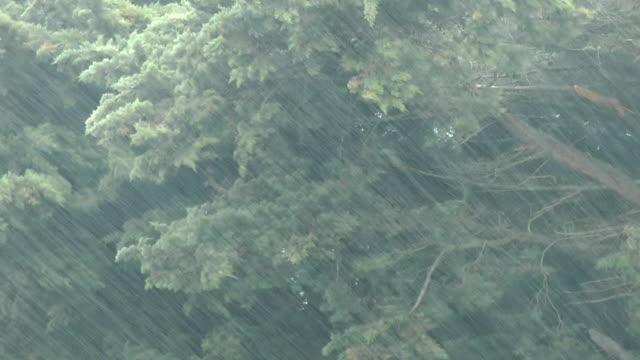 vídeos y material grabado en eventos de stock de tipo lluvia - lluvia torrencial