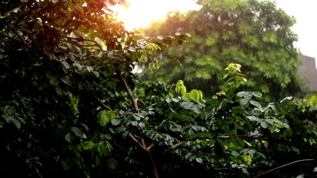 rain - monsoon stock videos & royalty-free footage