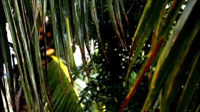 vídeos de stock, filmes e b-roll de rain water drops - arbusto tropical