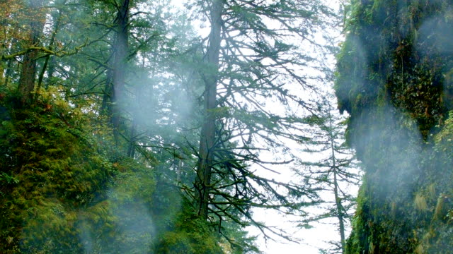 stockvideo's en b-roll-footage met rain water on trees columbia river gorge oregon rain in oneata gorge 39 - oregon amerikaanse staat