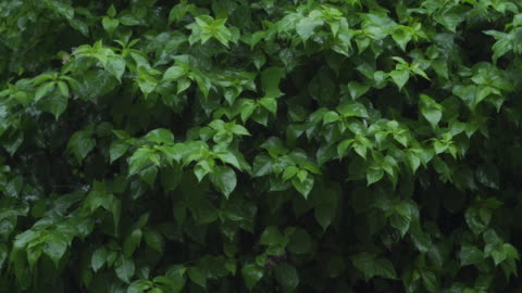 4k rain with green leaves background - leaf stock videos & royalty-free footage