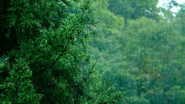 Rain with Trees background