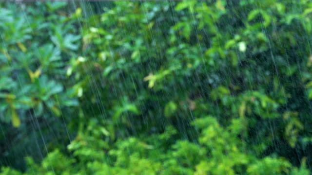 Rain with tropical trees background.
