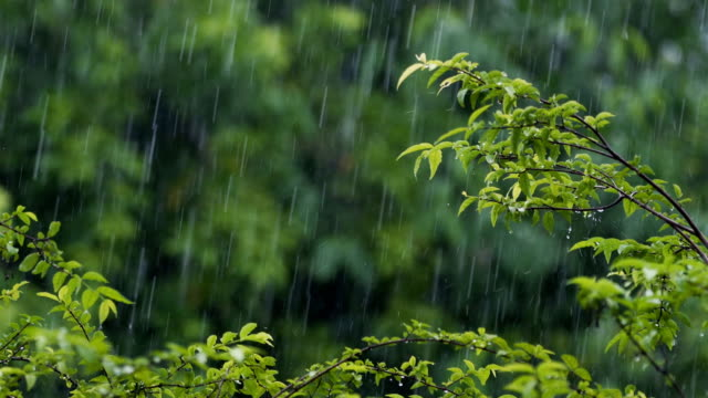 rain with tropical trees background - selective focus stock videos & royalty-free footage
