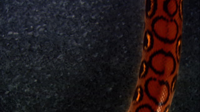 a rainbow boa constrictor slithers across a steel surface. - metal stock videos & royalty-free footage