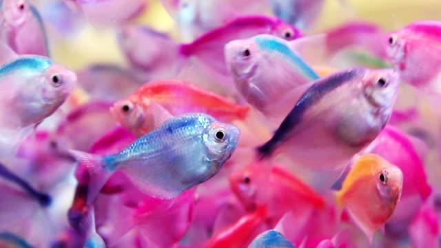 レインボーの魚