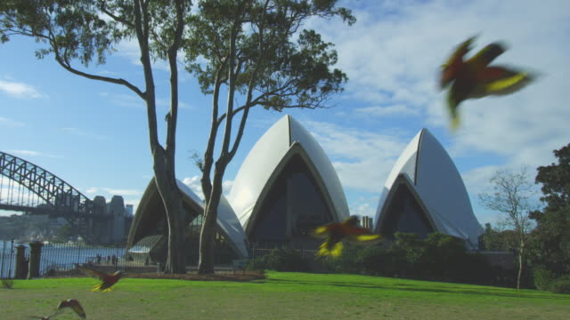 9 Rainbow Lorikeets flying across park to land in tree with Sydney Opera House in background