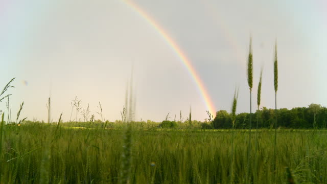 hd dolly: rainbow over field of barley - rainbow stock videos & royalty-free footage