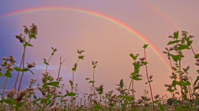 la ds regenbogen über dem buchweizen - stimmungsvoller himmel stock-videos und b-roll-filmmaterial