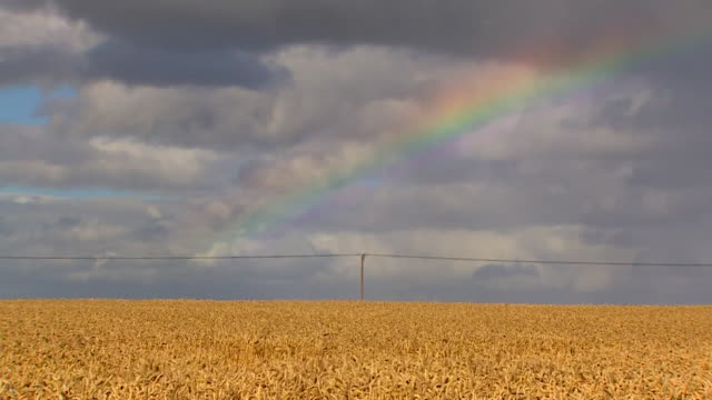 rainbow over wheat field - grass family stock videos & royalty-free footage