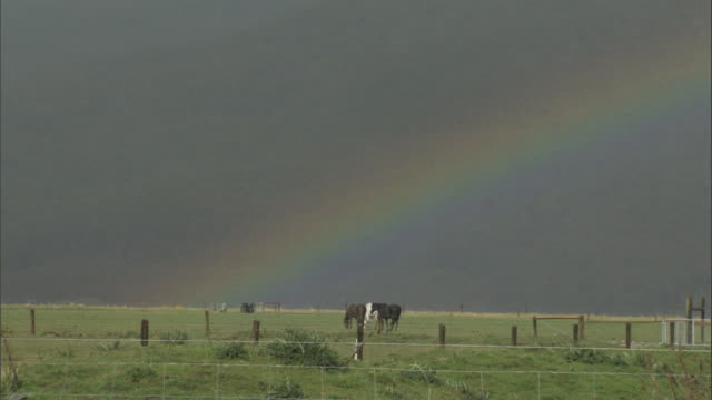 a rainbow shimmers over a pasture where horses graze. available in hd. - spectrum stock videos & royalty-free footage