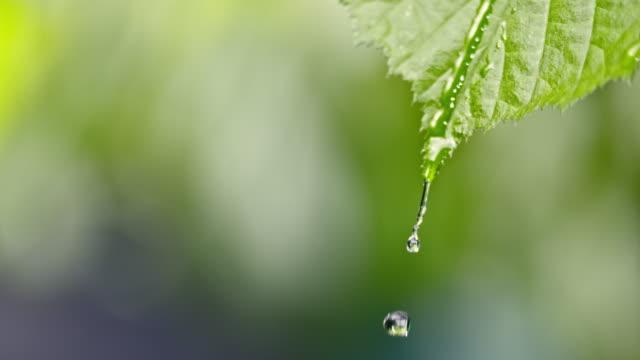 緑の葉の上を滑る slo mo ld 雨滴 - 雨粒点の映像素材/bロール