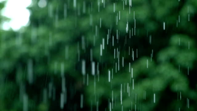 4k slo mo tu raindrop, tropical woods - rain stock videos & royalty-free footage
