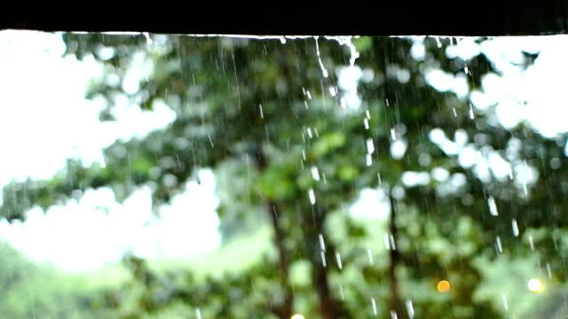 slomo regentropfen w / bäume hintergrund - ast pflanzenbestandteil stock-videos und b-roll-filmmaterial