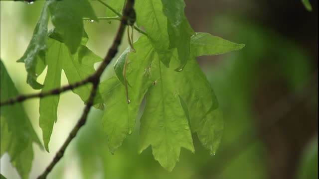 Raindrops cling to bright green tree leaves.
